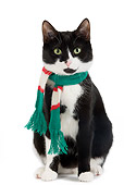 CAT 02 JE0112 01