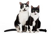 CAT 02 JE0114 01