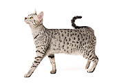 CAT 02 JE0120 01