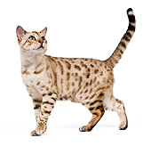 CAT 02 JE0122 01