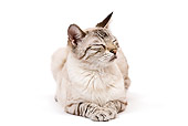 CAT 02 JE0124 01