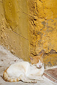 CAT 02 JE0127 01