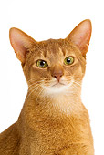 CAT 02 JE0130 01