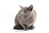 CAT 02 JE0135 01