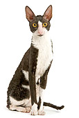 CAT 02 JE0137 01