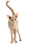CAT 02 JE0140 01