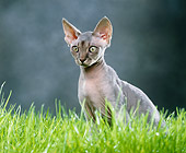 CAT 02 JE0145 01