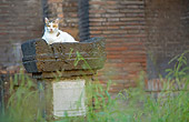 CAT 02 JE0148 01
