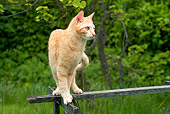 CAT 02 JE0154 01