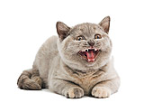CAT 02 JE0157 01