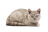 CAT 02 JE0158 01