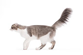 CAT 02 JE0159 01