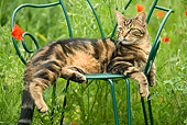 CAT 02 JE0161 01