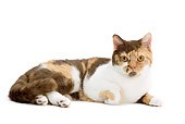 CAT 02 JE0162 01