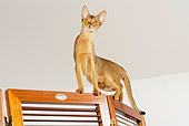 CAT 02 JE0164 01