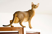 CAT 02 JE0165 01