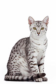 CAT 02 JE0166 01