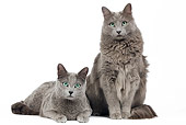 CAT 02 JE0167 01