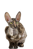 CAT 02 JE0169 01