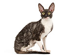 CAT 02 JE0170 01