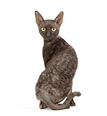 CAT 02 JE0172 01