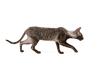 CAT 02 JE0174 01