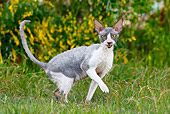 CAT 02 JE0176 01
