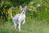 CAT 02 JE0177 01