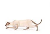 CAT 02 JE0179 01