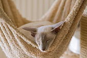 CAT 02 JE0180 01