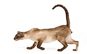 CAT 02 JE0181 01