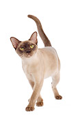 CAT 02 JE0312 01