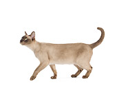 CAT 02 JE0313 01