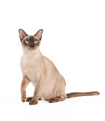 CAT 02 JE0314 01