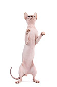 CAT 02 JE0316 01