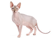 CAT 02 JE0318 01