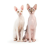CAT 02 JE0319 01