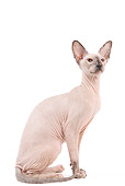 CAT 02 JE0322 01