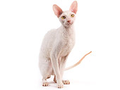 CAT 02 JE0323 01
