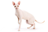 CAT 02 JE0324 01