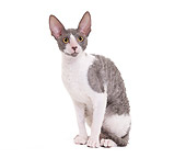 CAT 02 JE0330 01