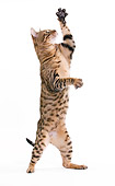 CAT 02 JE0331 01