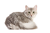 CAT 02 JE0335 01