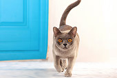 CAT 02 JE0338 01
