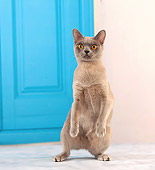 CAT 02 JE0339 01