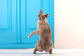 CAT 02 JE0340 01