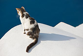 CAT 02 JE0341 01