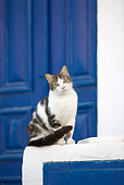 CAT 02 JE0344 01