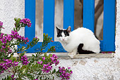 CAT 02 JE0346 01