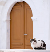 CAT 02 JE0347 01